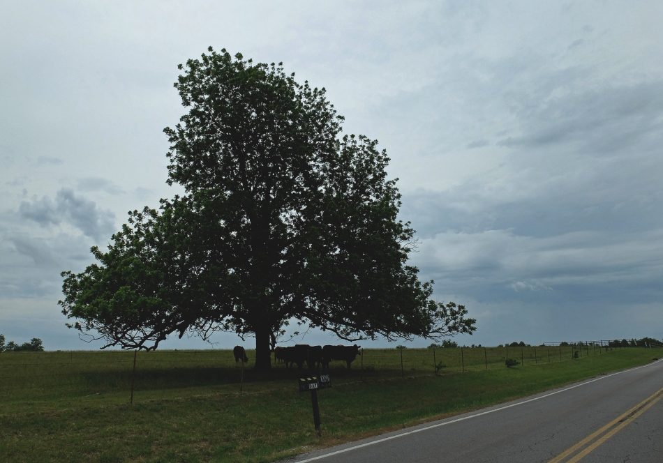 TreeCows